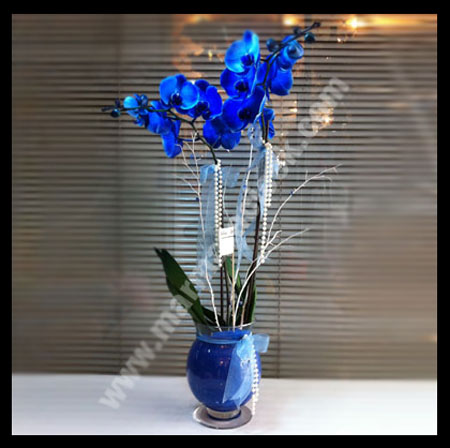 �ift Dal Mav� Orkide