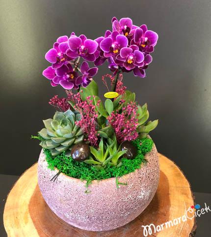 Mini Orkide Ýle Sukulentler