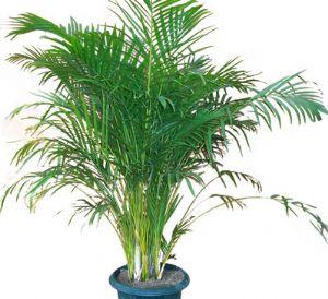 Areka salon bitkisi for Salon cicekleri yapay