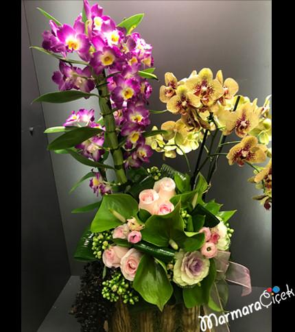 Orkide Gül Buluþmasý