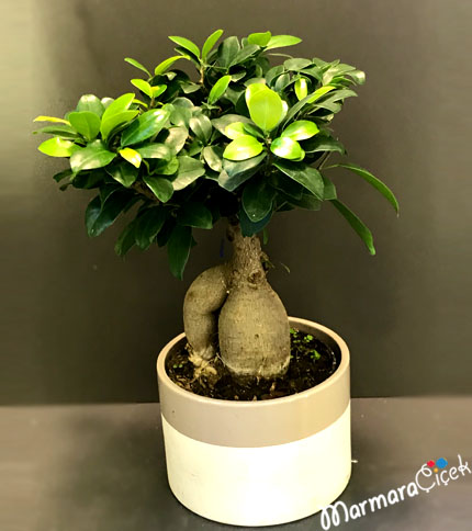 Seramikte Bonsai