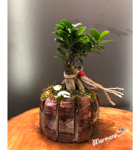 Ahşapta Mini Bonsai