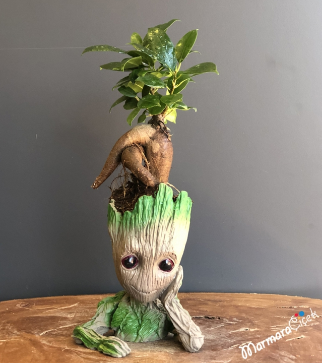 Baby Groot Serisi Mini Bonsai