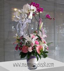 3 Dall� Orkide Aranjman