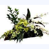 Orkide Arajmaný