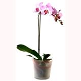 Orkide Bitkisi