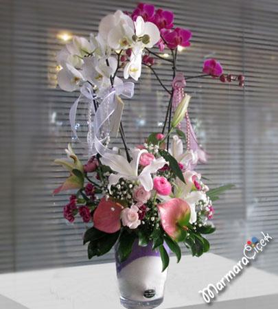 3 Dallý Orkide Aranjman