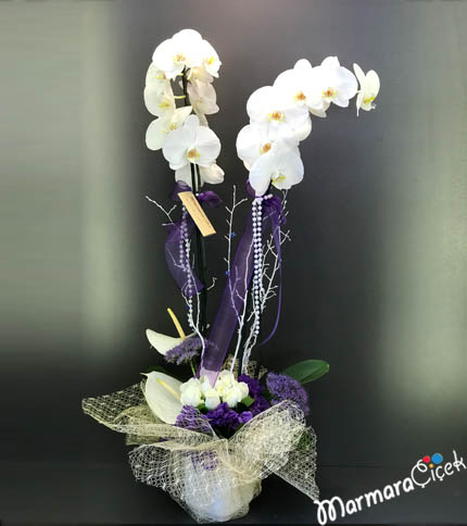 Çift Dallý Beyaz Orkideli Aranjman