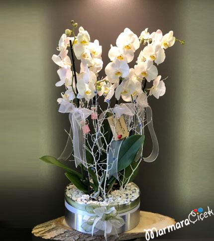 Galvanizde Orkideli Aranjman