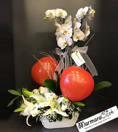 Balonlu Orkide