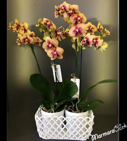 Seramikte Orkide Aranjmaný