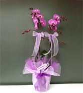 �iftli Mor Orkide