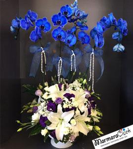 Mavi Orkide Aranjman