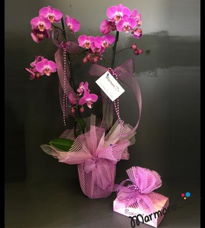 Orkide + Special Çikolata