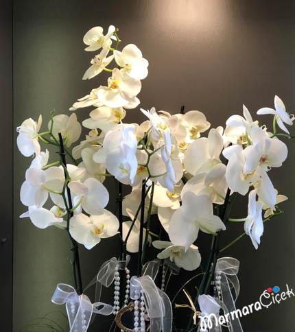 Orkidelerin Dansý