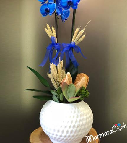 Baþaklý Mavi Orkide