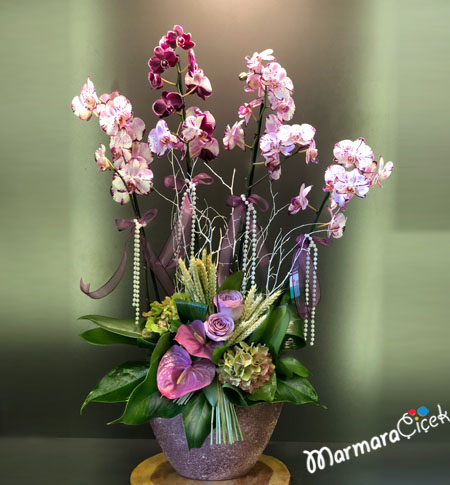 Kýrçýllý Orkide Aranjman