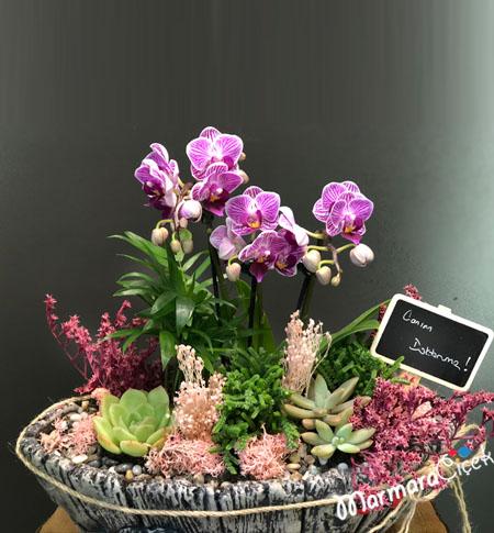Seramikte Orkide Tanzimi