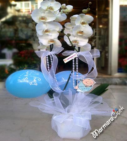 Balonlu Çiftli Orkide