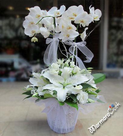 Beyaz Orkideler Lilyumlar