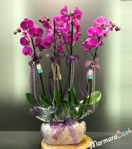 Seramikte Fuþya Orkide