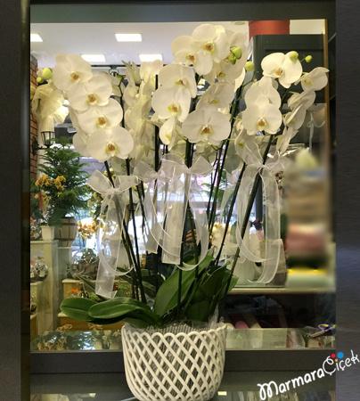 Beyaz Orkide Aranjmaný