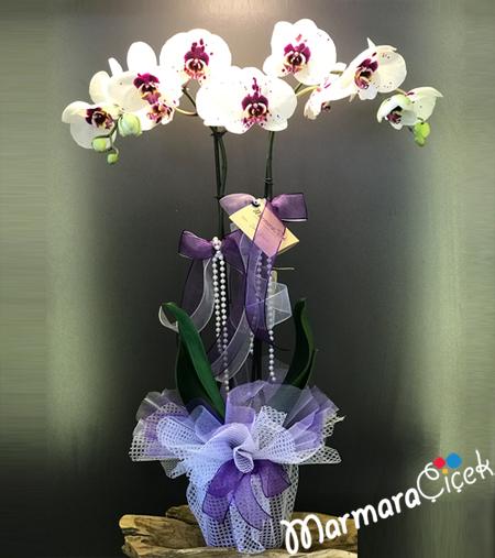Benekli Orkidem