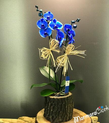 Mavi Orkidem Kütükte