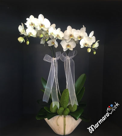Özel Saksýda Çiftli Beyaz Orkide