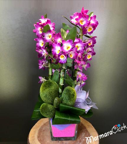 Fuþya Dendrobium Orkide Aranjman
