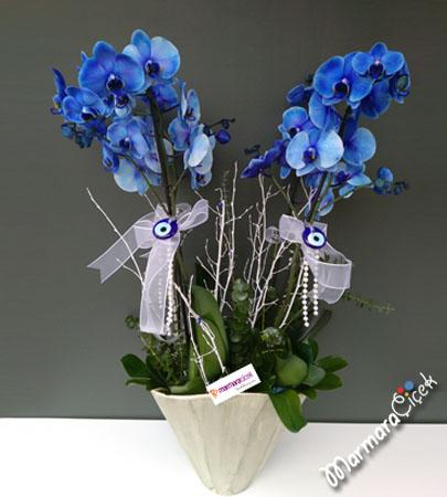 Dörtlü Mavi Orkide
