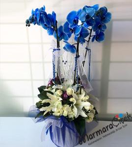 Mavi Orkideli  Aranjman