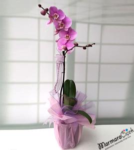 Tek Dallý Pembe Orkide