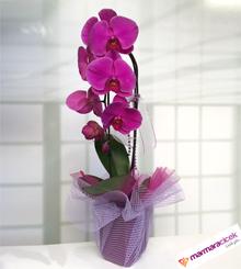 Fu�ya Orkide