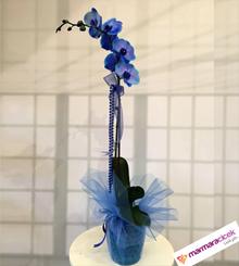 Tek Dall� Mavi Orkide