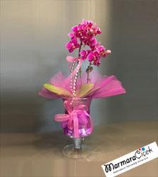 Minyatur Orkide