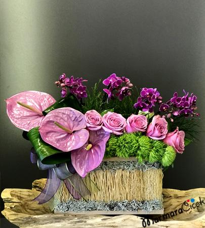 Sandýk Orkide ve Aranjman