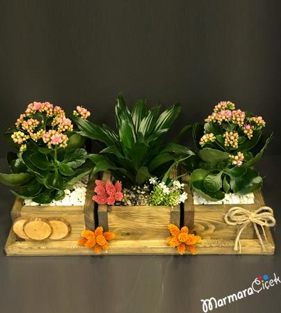 Çiçek Bahçesi
