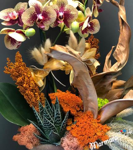 Benekli Orkide Aranjmaný