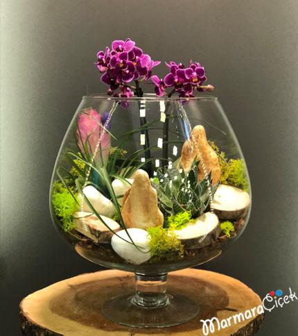 Kadehte Mini Orkideler