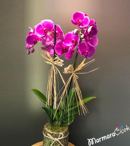 Kütükte Fuþya Orkide