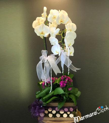 Kütükte Orkide ile Kalandiva