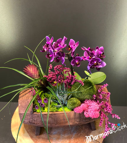 Ahþapta Orkide Tanzimi