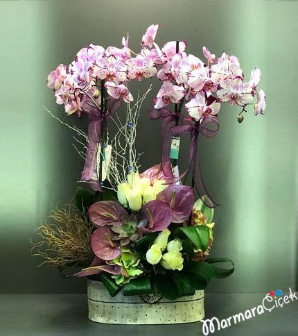 Lila Orkide Aranjmaný