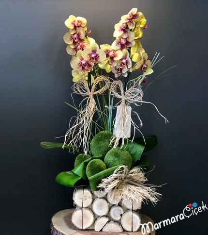 Kütükte Sarý Bordo Orkide