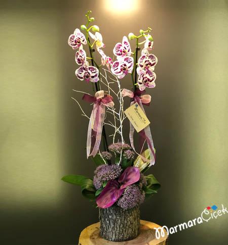 Dalmaçya Orkide Aranjman