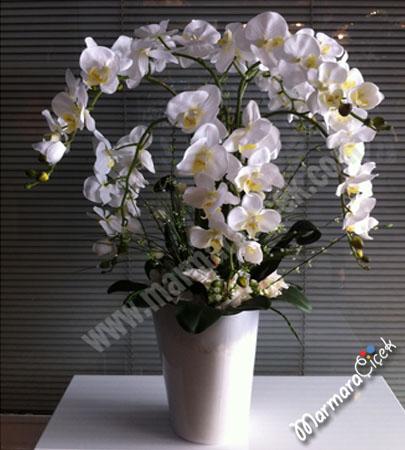 Orkideli Þýk Aranjman