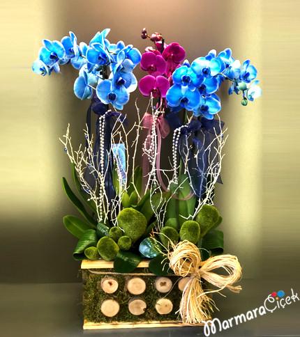 Kütükte Orkide Þöleni