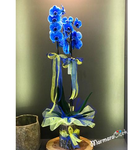 Fenerli Mavi Orkide